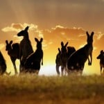 Avustralyada Dil Eğitimi