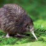 Yeni Zelanda'da Dil Eğitimi